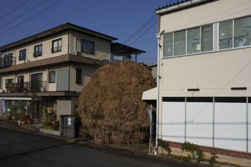 wazuka2020 makishima002